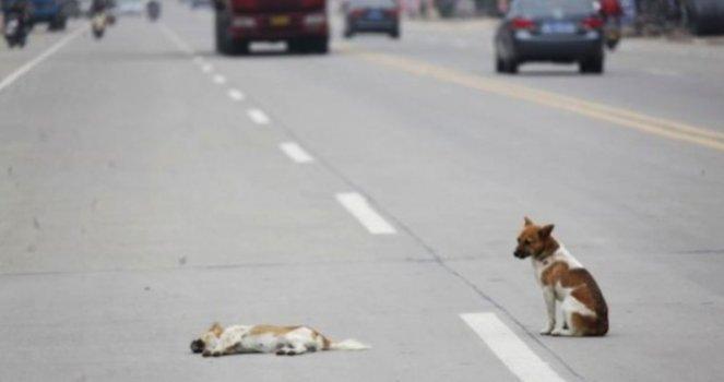 Promover a punição para as pessoas que deixam os cães em rodovias