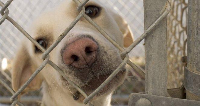 Castigo para aquellas personas que maltratan a los animales
