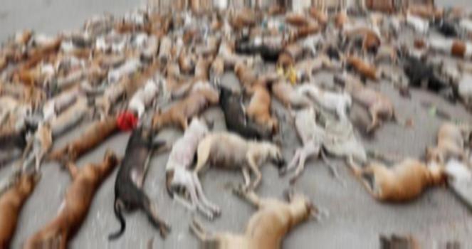 Parar con la matanza de perros en Karachi