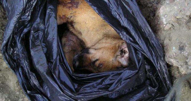 Denunciar la matanza de perros callejeros, torturados, embolsados y tirados en terrenos y baldíos
