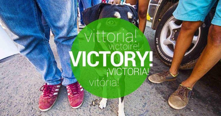Victoria confirmada! Hagamos una Marcha Contra el Maltrato Animal