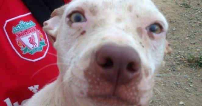 Detengamos el Envenenamiento Masivo de Animales en República Dominicana