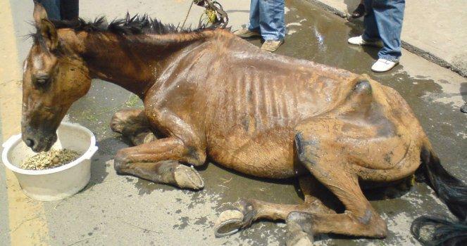 No a la Reducción de las Penas por Maltrato Animal