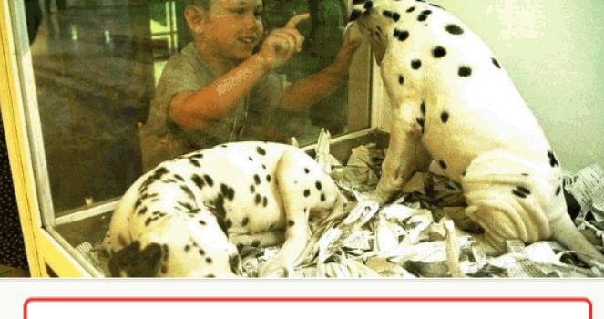 Que se dejen de vender animales en tiendas