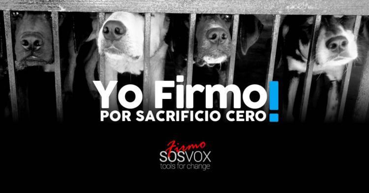 Zero sacrifice in the kennels of Mallorca