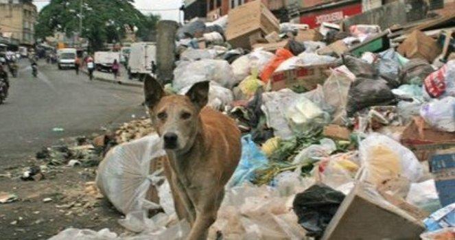 Esterilizar y Llevar a los Animales Callejeros a Refugios, hay que Buscar una Solución Más Beneficiosa para las Mascotas