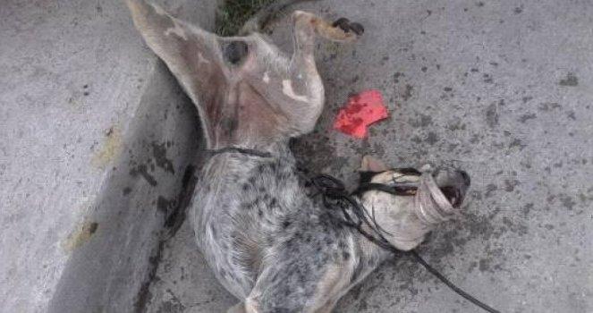 Castigo al Asesino que Mató Cruelmente y Despiadadamente a un Perrito!!!!
