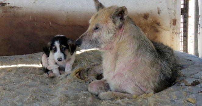 Que se Haga un Hospital Público Veterinario y que se Impida la Ordenanza de Medio Ambiente de Matar Animales