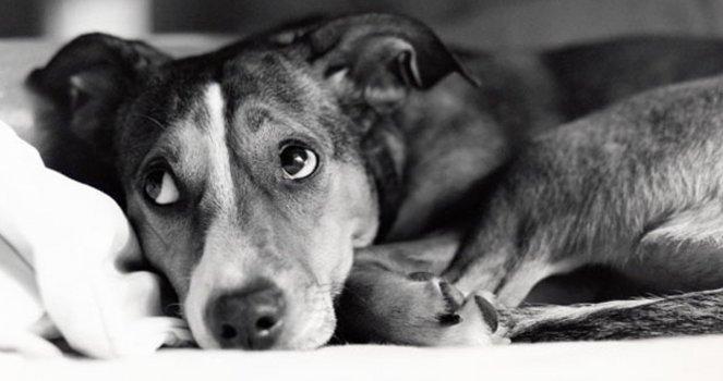 Maltraitance ANIMAUX  domestiques  chiens chats lapins etc  - Page 3 F7631e7cc505b07b82cc43f5f97a446d