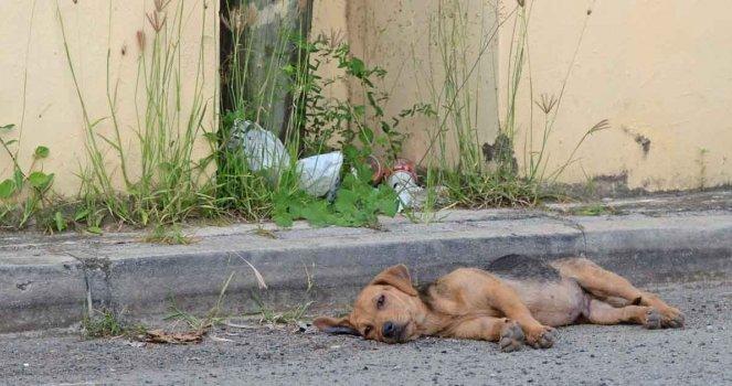 Exigimos do governo para fazer cumprir a lei contra o abuso de animais