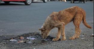 No más multas por cuidar animales callejeros!