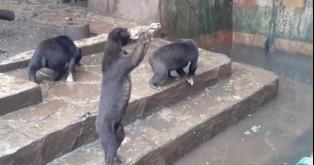 Cierren el torturador Zoológico de Bandung