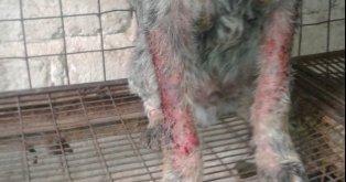 Presionemos por la Ley contra el Abuso Animal!