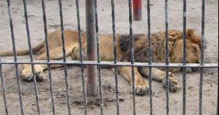 Liberen a los animales del Zoo, no más desidia!
