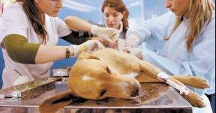Help to Continue With the Castrations Program!