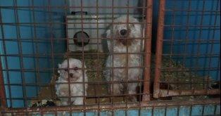 No a la mafia del tráfico ilegal de mascotas!