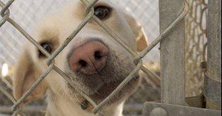 Defendamos a los animales del maltrato!