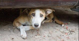 Salvar os cães! Não deixá-los morrer!