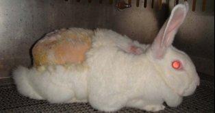 Basta de Usar Animales para Experimentos!