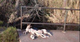 Castigo a asesinos y maltratadores de animales