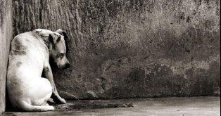Urgente un Hogar para Nuestros Perros y Gatos